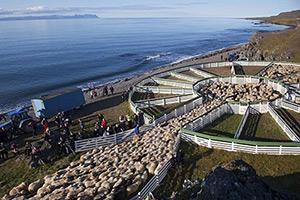 les-grands-rassemblements-de-troupeaux-islande