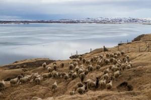 expo-photo-islande-ISBC0839