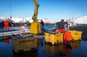 Snæfellsnes-islande-IISBC0945